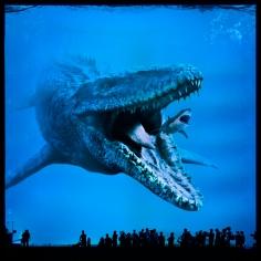 Mosasaurus feed